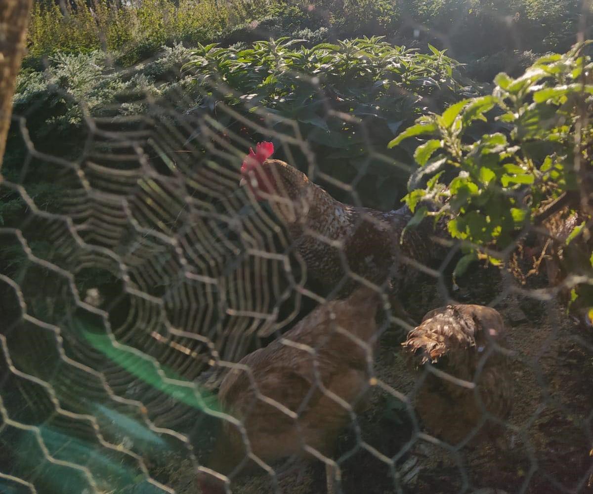 atrakcje agroturystyka bobrownia górowo iławeckie